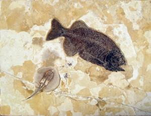 スティングレイとファレオダスの化石ボード