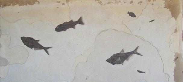 古代魚群の化石ボード