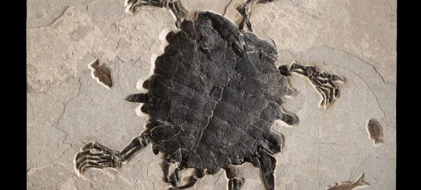 古代カメと小魚の化石ボード